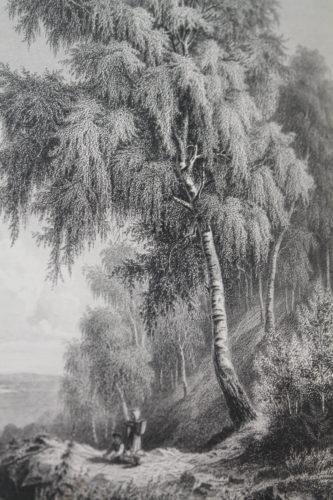 Gravure issu du monde des bois, des plantes, des animaux par J. Rothschild paru à Paris, 1865 Photo : BU Université catholique de Lyon